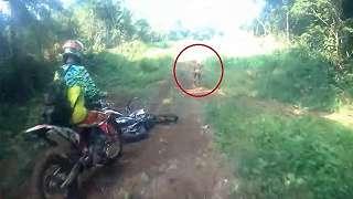 Heboh di Medsos Soal Makhluk Kecil Lincah di Hutan Aceh