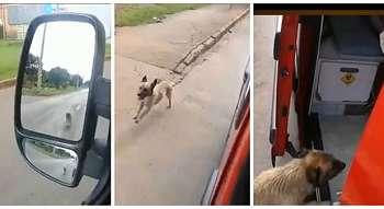 Kesetiaan yang Luar Biasa    Anjing ini Berlari Mengejar Ambulans yang Membawa Tuannya ke Rumah Sakit
