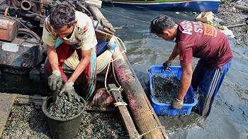 Tercemar merkuri, kerang hijau dari Teluk Jakarta sebabkan kanker