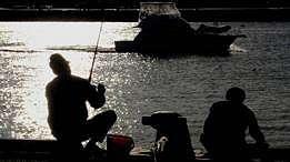 Seorang pemancing diseret ikan marlin selama enam jam