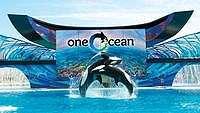 Abu Dhabi Akan Bangun SeaWorld, Tapi Tanpa Paus Pembunuh