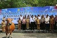 4 Kabupaten di Sulawesi Jadi Penyangga Sapi Nasional