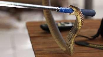 Buku harian pakar reptil yang mendokumentasikan kematiannya sendiri setelah digigit ular