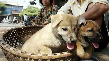 Warga Vietnam diserukan berhenti makan daing anjing dan kucing