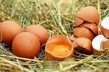 Dikira Telur, Kadal Australia Ini Telan 6 Bola Golf