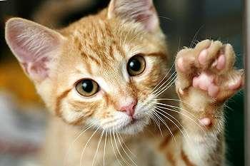 Kamu Memelihara Kucing? Lokid Nih 5 Manfaat Bagi Kamu yang Hidup Dengan Kucing!